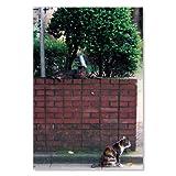 のら猫ポストカードシリーズ (a stray cat) No.032 〈外苑前〉