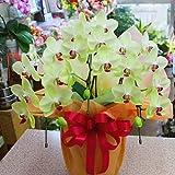 胡蝶蘭 鉢植え 黄色 3本立ち (生花)お祝いギフトや誕生日プレゼント、退職お祝いなどに長持ちする蘭の花の贈り物