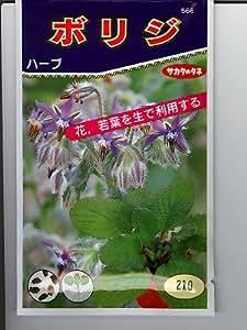 ホリジ  サカタ種苗のハーブ種です