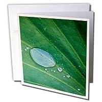 Danita Delimont–Leaves–カリフォルニア、サンタバーバラ、夏Solstice受信、ロータスリーフ–グリーティングカード Set of 6 Greeting Cards