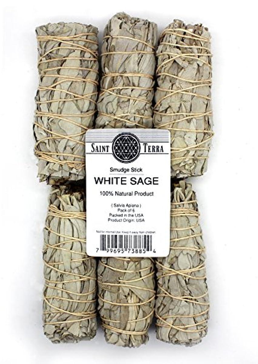 着飾る現金透過性Saint Terra – パックof 6 Miniカリフォルニアホワイトセージスマッジスティック、4インチLong ( Salvia Apiana )