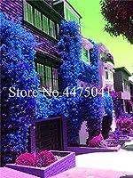 100個ミックスカラーBougainea盆栽バルコニー鉢植え、庭盆栽花非常、Floriferousハーディ:16
