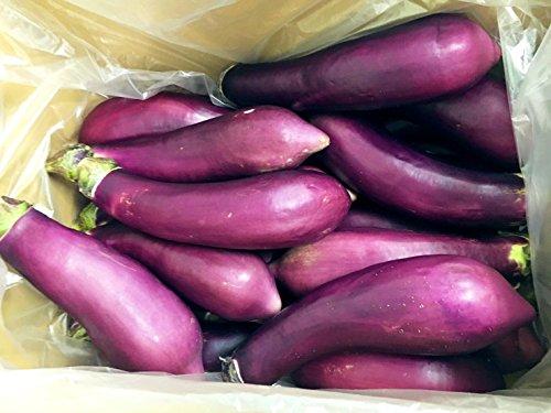 熊本県産 ( 九州 ) 熊本県特産の茄子 ヒゴムラサキ 1ケース 20本 新鮮 阿蘇なす 産地直送