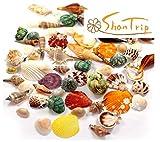 ShanTrip カラフル 貝殻 アソート セット 置物 オブジェ ハンドメイド サンゴ シェル