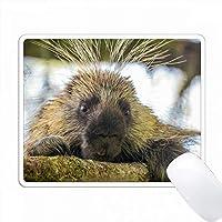 アメリカ、アラスカ、グレイシャーベイNP。木の中のポーキュパインのクローズアップ。 PC Mouse Pad パソコン マウスパッド