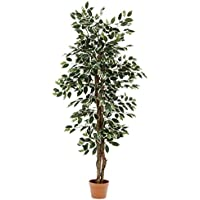 不二貿易 観葉植物 フィカス B 高さ160cm グリーン 52663