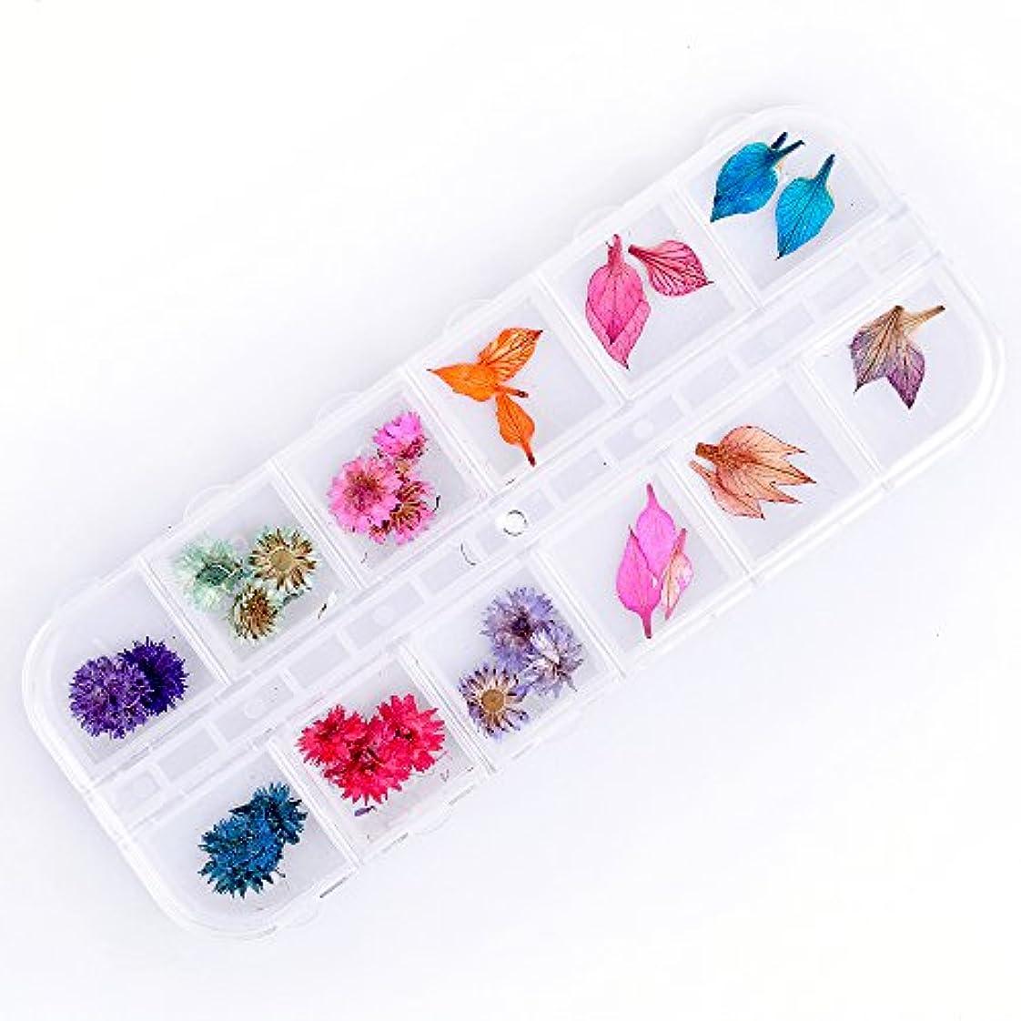風子音成長Takarafune 押し花 ドライフラワー 葉 3Dネイル レジンデコレーション DIY ネイルパーツ 明収納ケース 2種類 各6色
