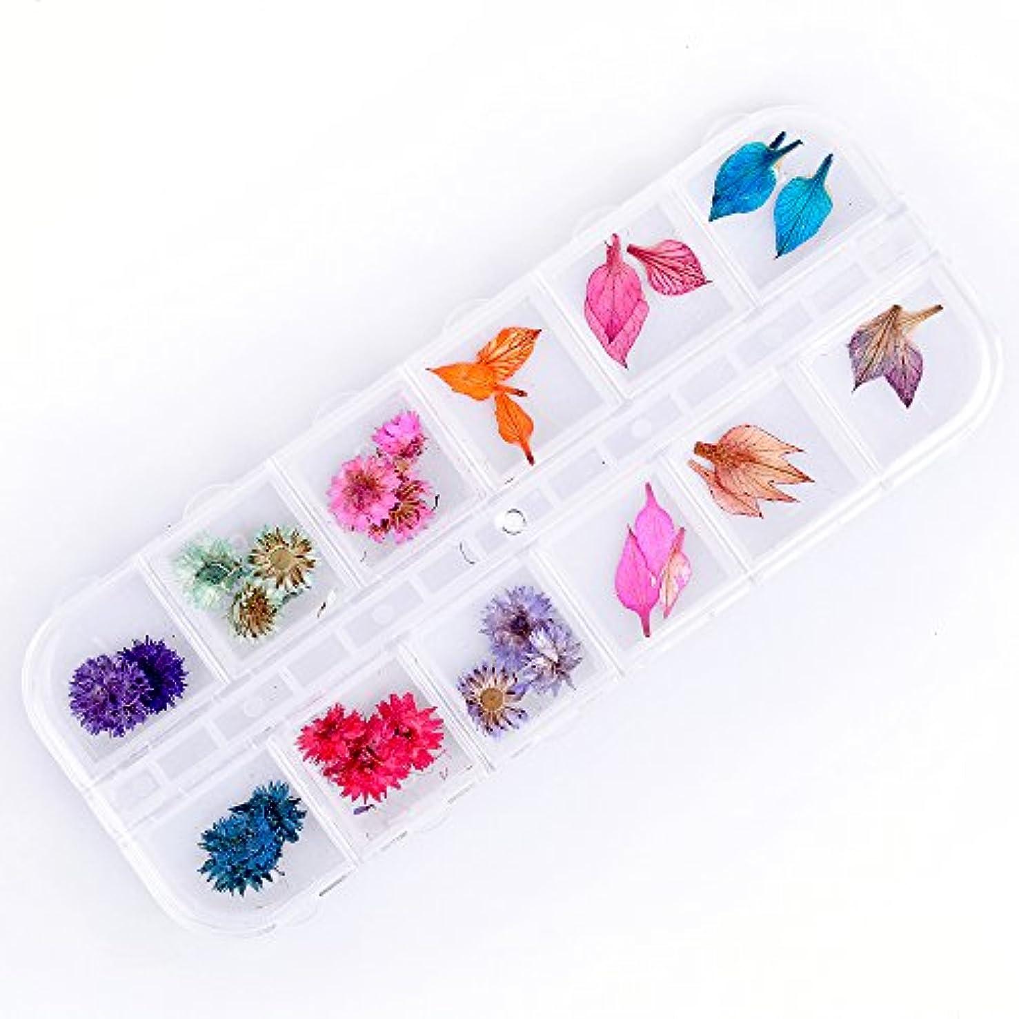 高尚な長いです城Takarafune 押し花 ドライフラワー 葉 3Dネイル レジンデコレーション DIY ネイルパーツ 明収納ケース 2種類 各6色