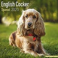 English Cocker Spaniel Calendar 2020