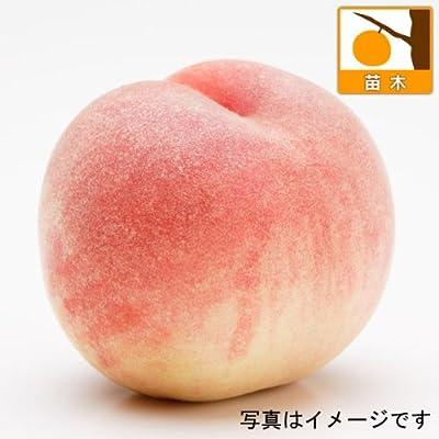 モモ(桃)2種受粉樹セット:白桃(はくとう)と日川白鳳(ヒカワハクホウ) [苗木]