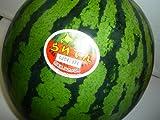 北海道共和町産 特大らいでんすいか 秀品1玉入り(1玉7kg以上 3L以上)