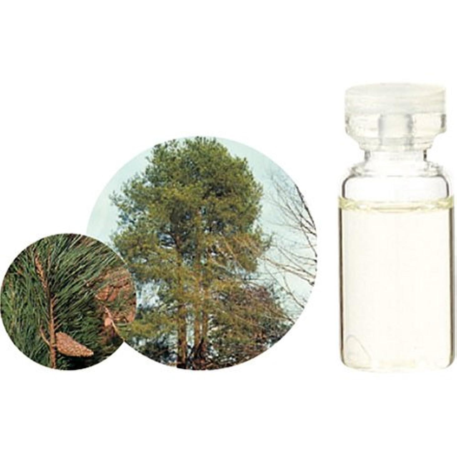 ジュニア別れるナイトスポット生活の木 C パイン エッセンシャルオイル 10ml