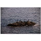 ポストカード「和歌山県の南の島」フォトカード絵葉書はがきハガキ葉書postcard