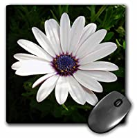 3drose LLC 8x 8x 0.25インチマウスパッド、花African Daisy ( MP _ 17667_ 1)
