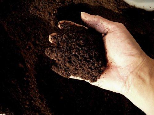 プロ仕様 発酵カブトマット 約50L箱 お徳用カブト虫マット