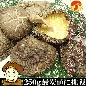 国産椎茸 無農薬原木栽培