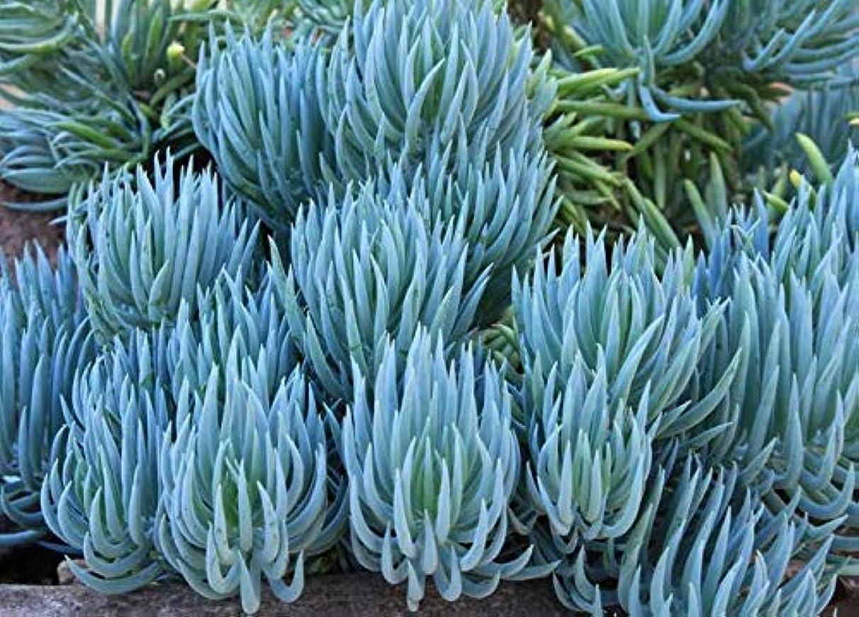 パスタ肌寒い葉種:5つのFRESHチョークは10