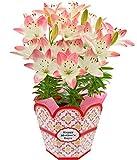 母の日 百合 シュガーラブ フラワーギフト 鉢花 5.5号鉢(5本植)