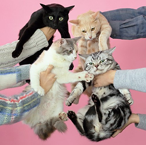 猫とアレルギーの詳細を見る