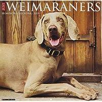Just Weimaraners 2019 Calendar