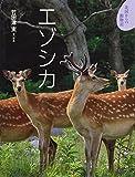 エゾシカ (北国からの動物記)