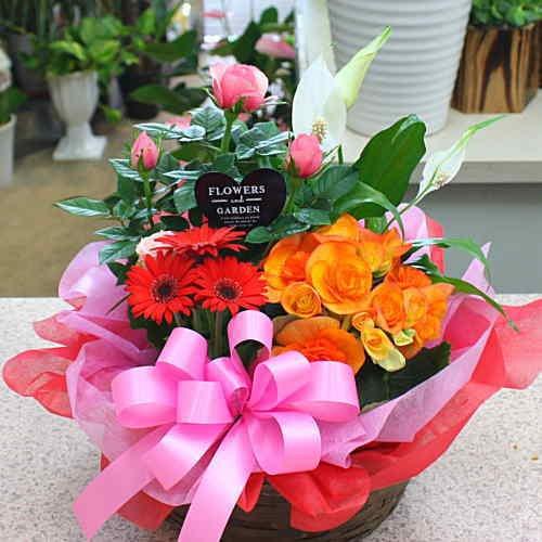 季節の鉢植え 寄せ鉢ギフトM 3から4種類の鉢花や観葉植物をか...
