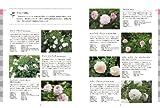 オールドローズ&イングリッシュローズ: この1冊を読めば系統、交配、栽培などすべてがわかる (ガーデンライフシリーズ) 画像