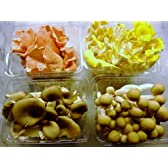 国産信州キノコのセット!ヒラタケ、とき色ヒラタケ、ぶなしめじ、たもぎ茸、柳まつたけの中の4種予定 毎週金曜日発送予定