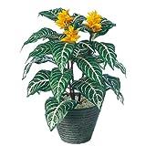 エフプランター 人工観葉植物-ダニア-40-5号鉢-PラウンドS(BK)