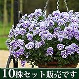パンジー フリーフォール系 マリーナ 10.5cmサイズ大ポット 10ポットセット パンジー ビオラ すみれ 苗 寄せ植え