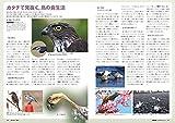 BIRDER(バーダー)2019年4月号 鳥の食生活 事典 画像