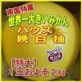 南国特産 柑橘類 特秀品 ハウス 晩白柚 ばんぺいゆ 1玉 およそ2kg 化粧箱入り