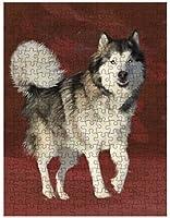 """シベリアのハスキー犬パズル フォトブリキ缶付き D587 500 pc. 14"""" x 20"""" DOTD-PUZL-A70583"""
