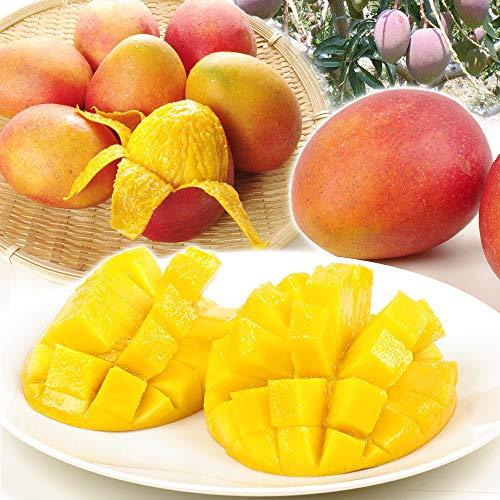 国華園 台湾産 ご家庭用 アップルマンゴー 約1.5kg 冷蔵