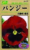カネコ種苗 草花タネ121 パンジー 大輪咲き 赤花 10袋セット