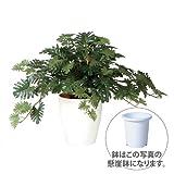 エフプランター 人工観葉植物-クッカバラ-60-7号鉢-懸崖鉢