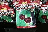 【果樹苗】【接木】 サクランボ アメリカンチェリー 一年生 【送料込価格】
