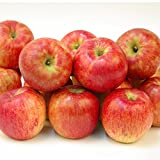 国華園 青森産 お楽しみりんご 10kg