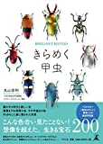 きらめく甲虫 画像