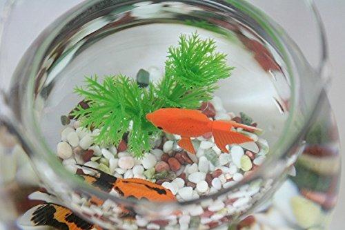 金魚鉢と金魚 ガラス製金魚鉢にエサのいらない金魚、新五色石、水草付き