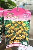 秋植え球根 早咲きクロッカス12球入り ドロシー(黄に紫) 2袋セット  送料込