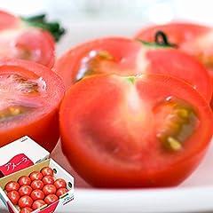 トマト 高糖度 フルーツトマト アメーラ 秀品 約1kg 12~20個 長野県産 静岡県産