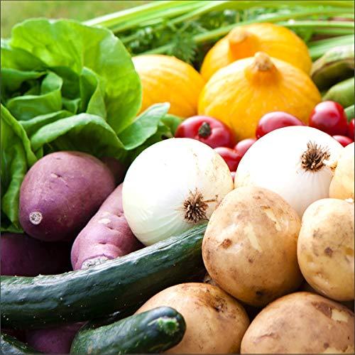 国産 おまかせ 野菜セット B 果物1品+野菜9種類以上 旬野菜 季節野菜 人気 野菜詰め合わせ 定期 お取り寄せ