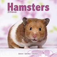 Hamsters Calendar 2019 (Square)