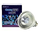 ボルクスジャパン グラッシーレディオ RX072 ディープ