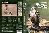 Raptor Profile vol.2 チュウヒ Eastern Marsh Harrier in Hokkaido [DVD]