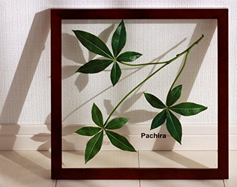 リーフパネル Forest Deco Pachira(パキラ)/ 絵画 壁掛け のあゆわら