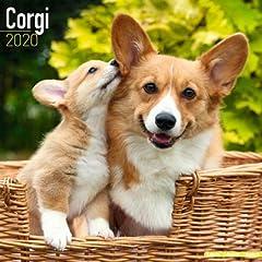 海外輸入版 2020年ドッグカレンダー ウェルシュコーギー