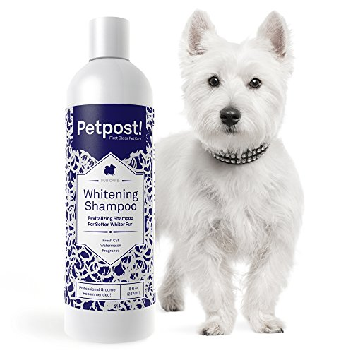 Petpost | 犬用ホワイトニングシャンプー - 白い犬のベストカラートリートメントシャンプー - 爽やかなスイ...