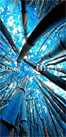 ホームガーデンプラントの40個ブルー竹工場モウソウチクレアジャイアント竹盆栽Bambusa Lakoツリー工場:4